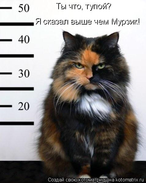 Котоматрица: Ты что, тупой? Я сказал выше чем Мурзик!