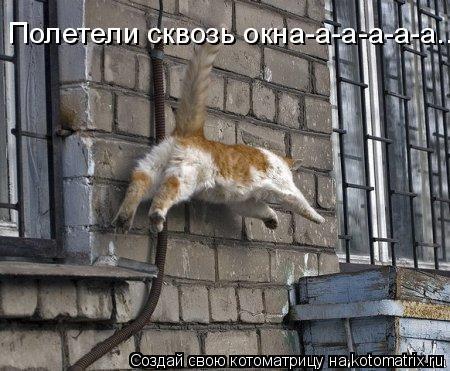 Котоматрица: Полетели сквозь окна-а-а-а-а-а...