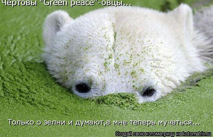 """Котоматрица: Чёртовы """"Green peace""""-овцы... Только о зелни и думают,а мне теперь мучаться..."""