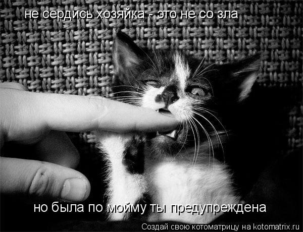 Котоматрица: не сердись хозяйка - это не со зла но была по мойму ты предупреждена