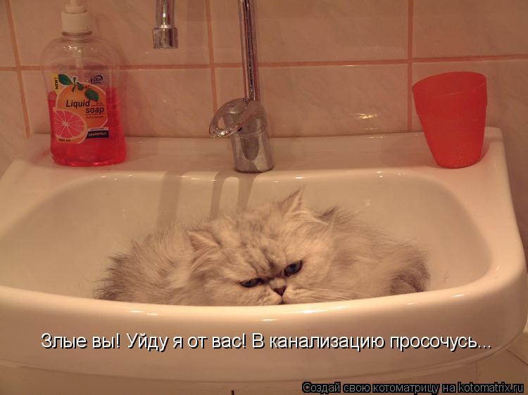 Котоматрица: Злые вы! Уйду я от вас! В канализацию просочусь...