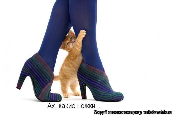 Котоматрица: Ах, какие ножки...