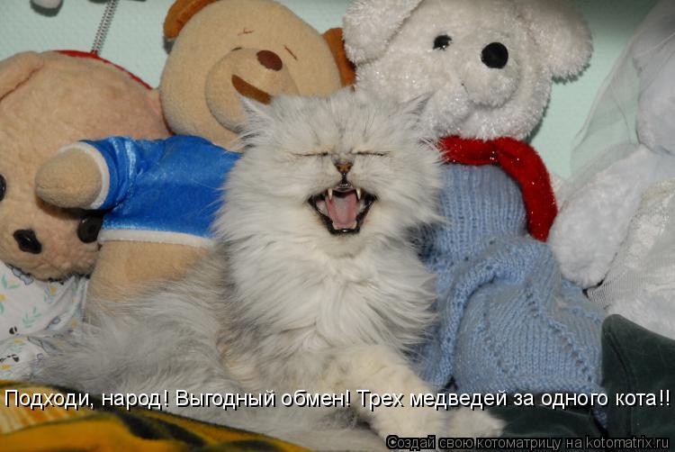 Котоматрица: Подходи, народ! Выгодный обмен! Трех медведей за одного кота!!