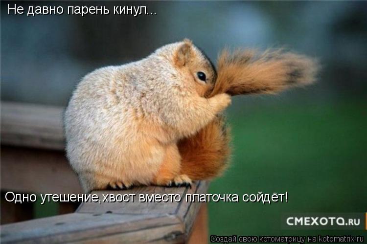 Котоматрица: Не давно парень кинул... Одно утешение,хвост вместо платочка сойдёт!
