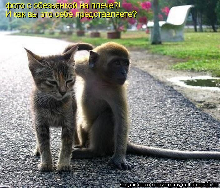 Котоматрица: фото с обезьянкой на плече?!  И как вы это себе представляете?