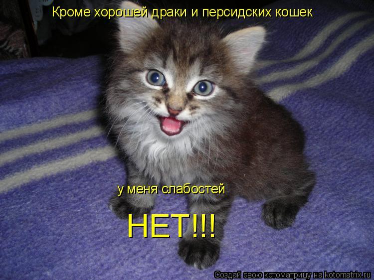 Котоматрица: Кроме хорошей драки и персидских кошек у меня слабостей НЕТ!!!