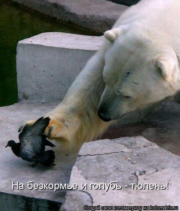 Котоматрица: На безкормье и голубь - тюлень!