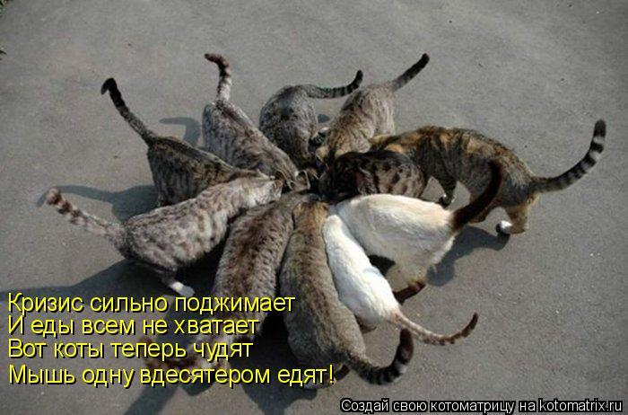 Котоматрица: Кризис сильно поджимает И еды всем не хватает Вот коты теперь чудят Мышь одну вдесятером едят!