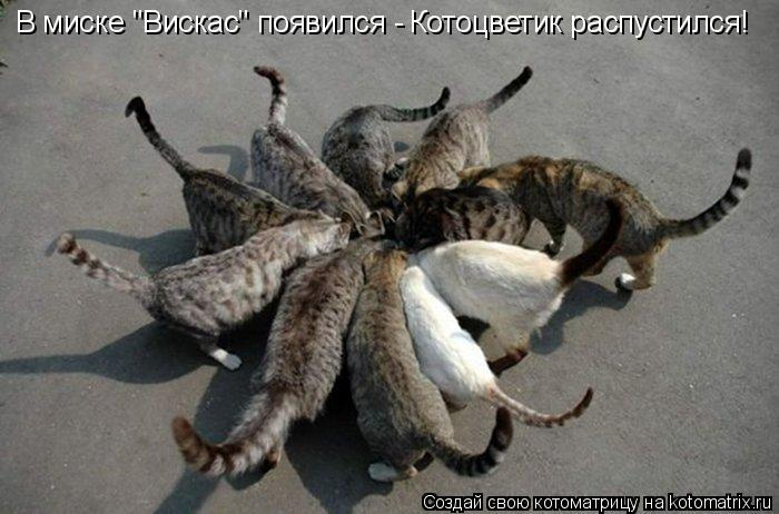 "Котоматрица: В миске ""Вискас"" появился - Котоцветик распустился!"