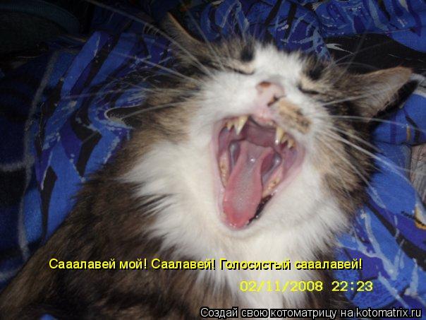 Котоматрица: Сааалавей мой! Саалавей! Голосистый сааалавей!