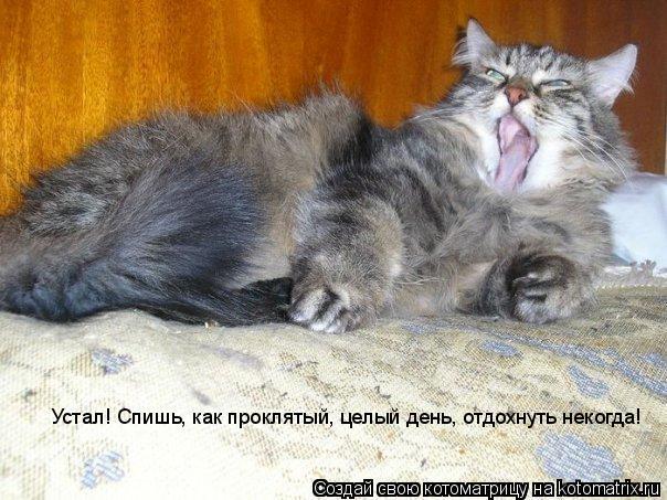 Котоматрица: Устал! Спишь, как проклятый, целый день, отдохнуть некогда!