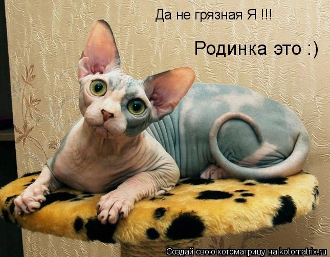 Котоматрица: Да не грязная Я !!! Родинка это :)