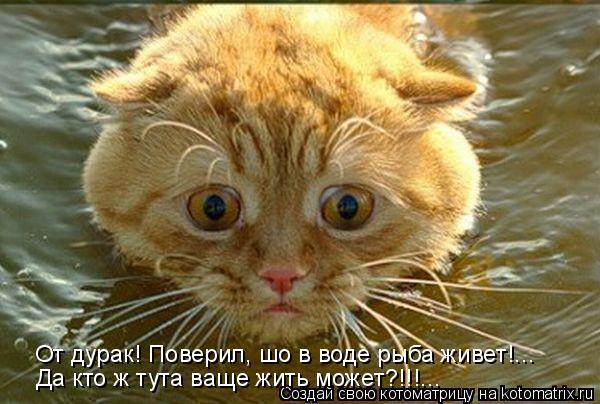 Котоматрица: От дурак! Поверил, шо в воде рыба живет!... Да кто ж тута ваще жить может?!!!...
