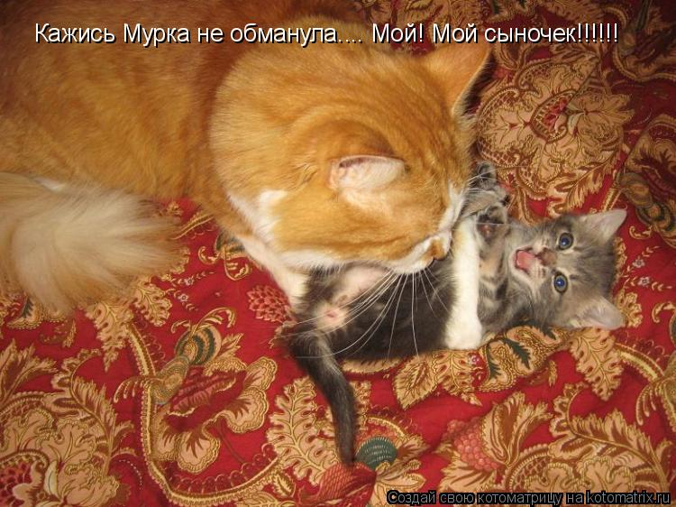 Котоматрица: Кажись Мурка не обманула.... Мой! Мой сыночек!!!!!!