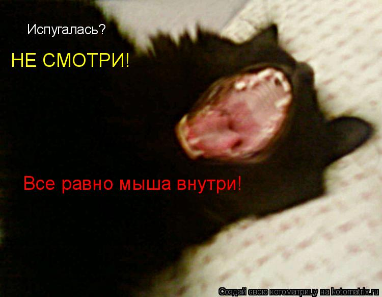Котоматрица: Испугалась?  НЕ СМОТРИ! Все равно мыша внутри!
