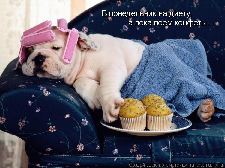 Котоматрица: В понедельник на диету , а пока поем конфеты...