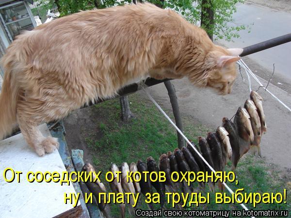 Котоматрица: От соседских от котов охраняю, ну и плату за труды выбираю!