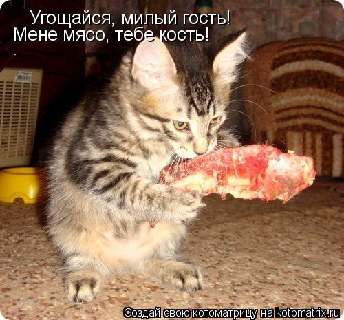 Котоматрица: Угощайся, милый гость! Мене мясо, тебе кость!