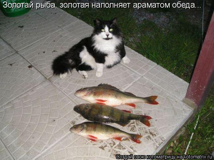 Котоматрица: Золотай рыба, золотая наполняет араматом обеда...
