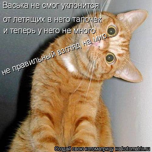 Котоматрица: Васька не смог уклонится  от летящих в него тапочек и теперь у него не много не правильный взгляд на мир...