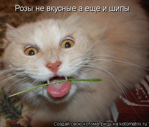 Котоматрица: Розы не вкусные а еще и шипы