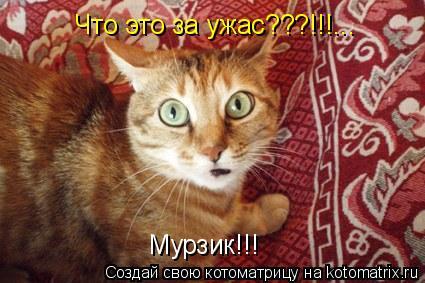 Котоматрица: Что это за ужас???!!!... Мурзик!!!