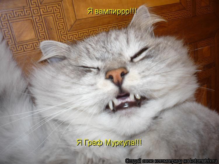 Котоматрица: Я Граф Муркула!!! Я вампиррр!!!