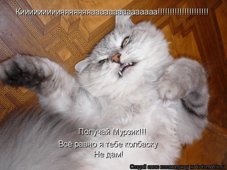 Котоматрица: Кииииииииияяяяяяяааааааааааааааа!!!!!!!!!!!!!!!!!!!!! Получай Мурзик!!! Всё равно я тебе колбаску Не дам!