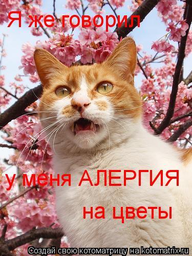 Котоматрица: Я же говорил  у меня АЛЕРГИЯ на цветы