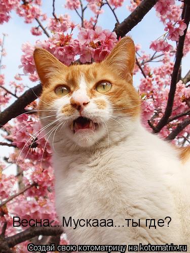 Котоматрица: Весна...Мускааа...ты где?