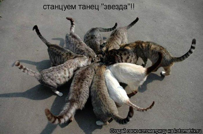 "Котоматрица: станцуем танец ""звезда""!!"