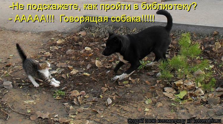 Котоматрица: -Не подскажете, как пройти в библиотеку? - ААААА!!!  Говорящая собака!!!!!
