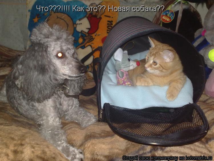 Котоматрица: Что???!!!! Как это?? Новая собака??