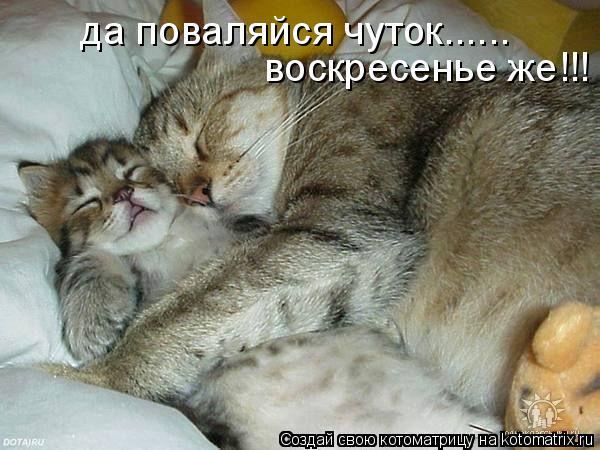 Котоматрица: да поваляйся чуток...... воскресенье же!!!