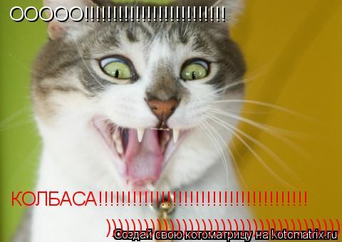 Котоматрица: ООООО!!!!!!!!!!!!!!!!!!!!!!!!! КОЛБАСА!!!!!!!!!!!!!!!!!!!!!!!!!!!!!!!!!!!!! )))))))))))))))))))))))))))))))))))))))