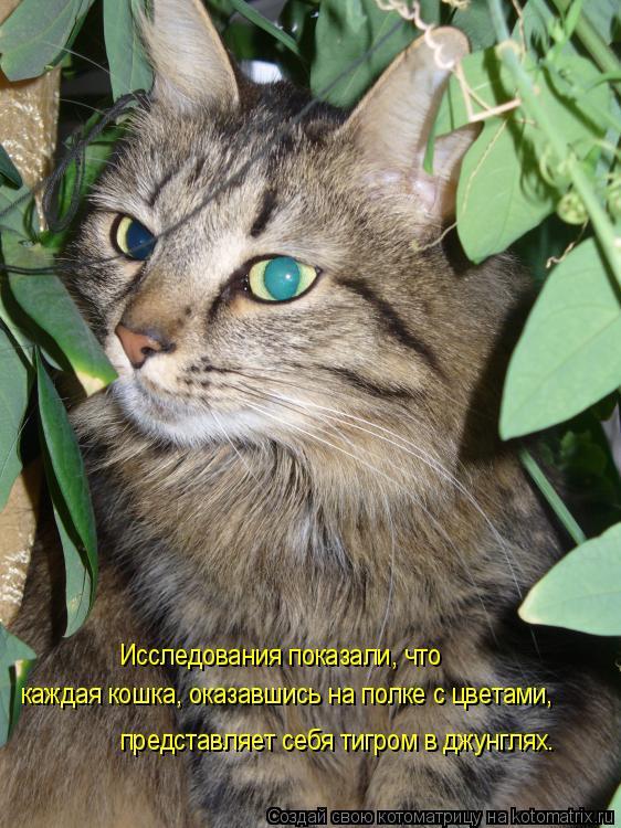Котоматрица: представляет себя тигром в джунглях. Исследования показали, что каждая кошка, оказавшись на полке с цветами,