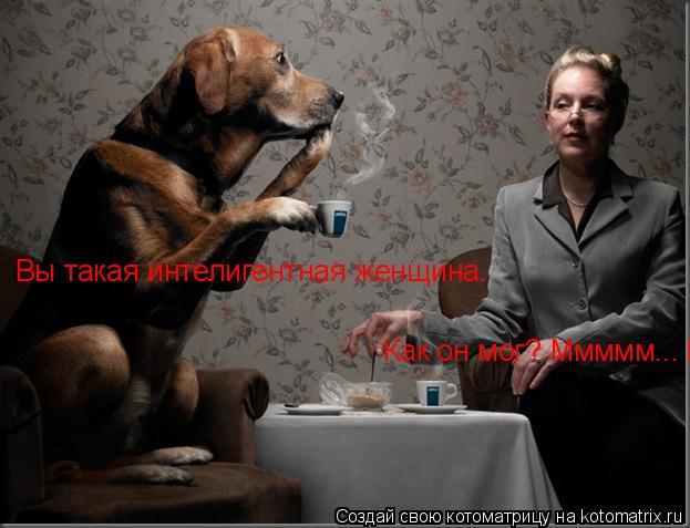 Котоматрица: Как он мог? Ммммм... Вы такая интелигентная женщина.   Вы такая интелигентная женщина.