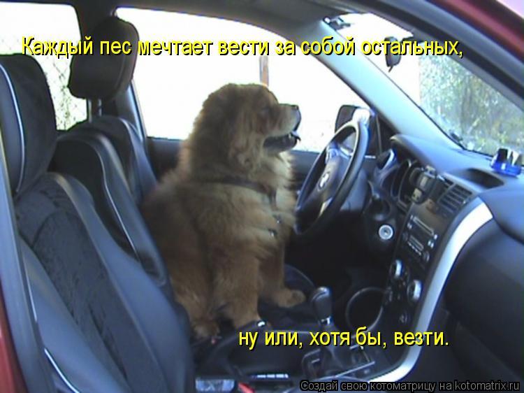 Котоматрица: Каждый пес мечтает вести за собой остальных, ну или, хотя бы, везти.