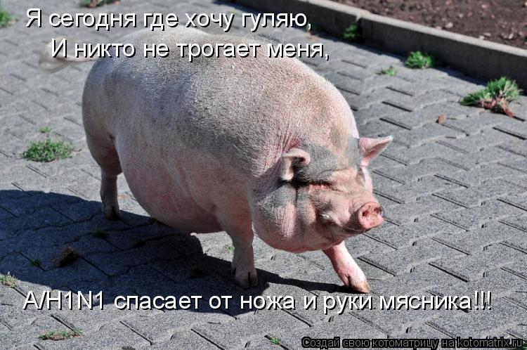 Котоматрица: Я сегодня где хочу гуляю, И никто не трогает меня, А/H1N1 спасает от ножа и руки мясника!!!