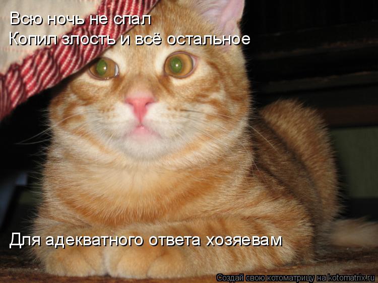 Котоматрица: Всю ночь не спал Копил злость и всё остальное Для адекватного ответа хозяевам