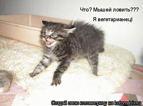 Котоматрица: Что? Мышей ловить??? Я вегетарианец!