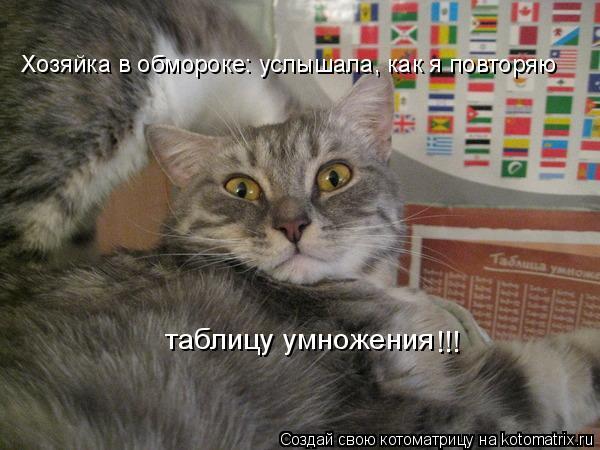 Котоматрица: Хозяйка в обмороке: услышала, как я повторяю  таблицу умножения !!!