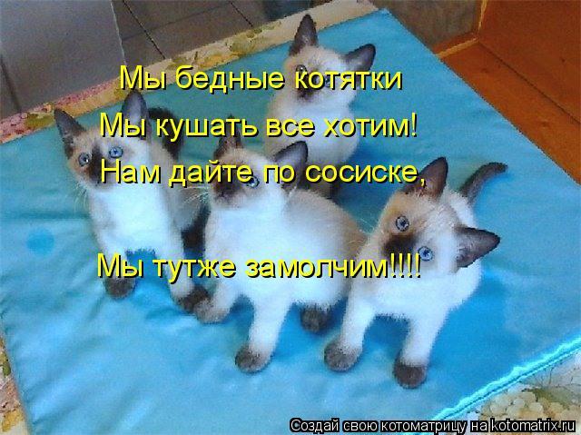 Котоматрица: Мы бедные котятки Мы кушать все хотим! Нам дайте по сосиске, Мы тутже замолчим!!!!