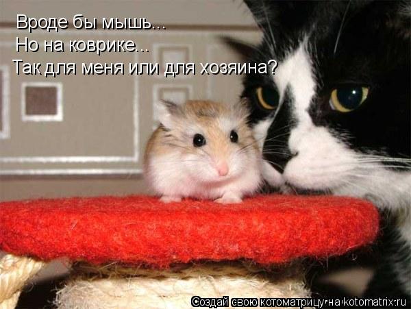 Котоматрица: Вроде бы мышь... Но на коврике... Так для меня или для хозяина?