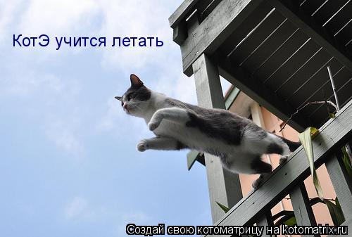 Котоматрица: КотЭ учится летать