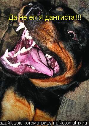 Котоматрица: Да не ел я дантиста!!!