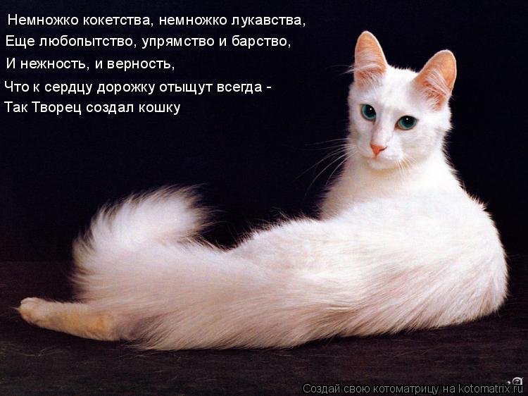 Котоматрица: Немножко кокетства, немножко лукавства, Еще любопытство, упрямство и барство, Так Творец создал кошку И нежность, и верность,  Что к сердцу д