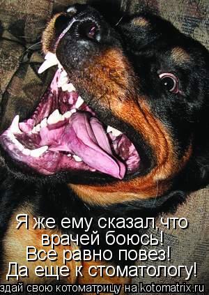 Котоматрица: Я же ему сказал,что врачей боюсь! Все равно повез! Да еще к стоматологу!