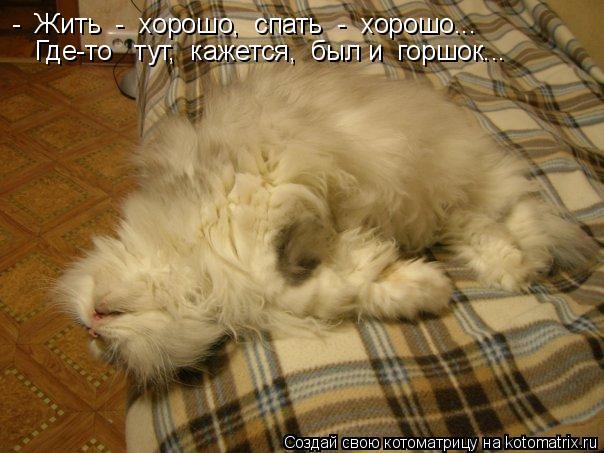 Котоматрица: -  Жить  -  хорошо,  спать  -  хорошо...  Где-то   тут,  кажется,  был и  горшок...