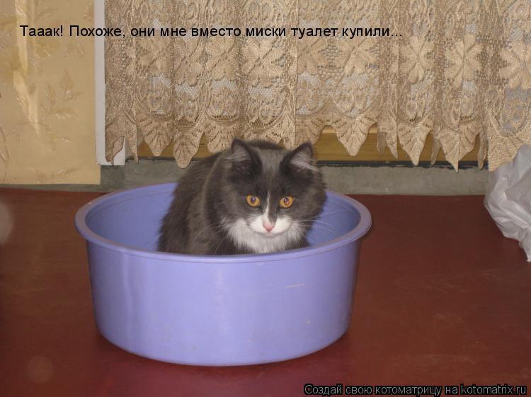 Котоматрица: Тааак! Похоже, они мне вместо миски туалет купили...
